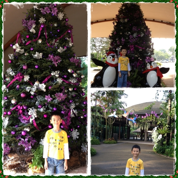 Greeted by the Christmas decorations in Jurong Bird Park