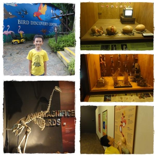 Birds Discovery Center