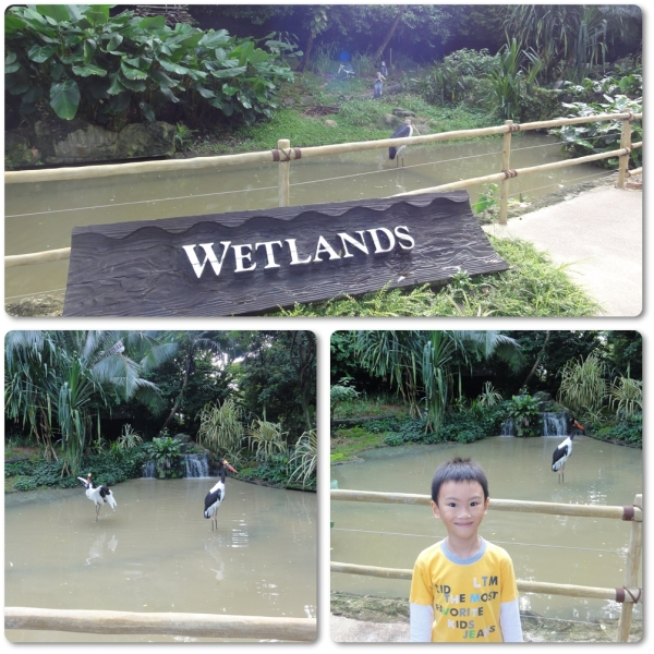 Located right in front of the Wet and Dry Playground, Wetlands is just behind the Flamingo Pool