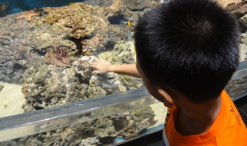 Touching the starfish was like touching  a rock