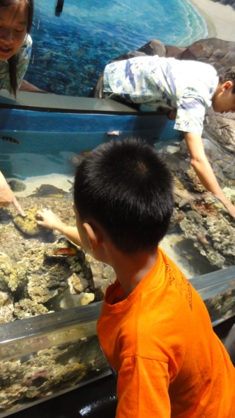 Many staff were around the pool to give explanation and encourage the kids to touch the creatures