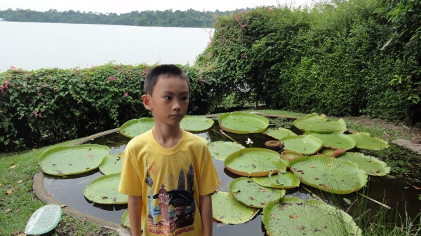 Giant Lily pad