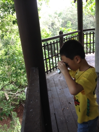 Looking for birds from bird watching hut