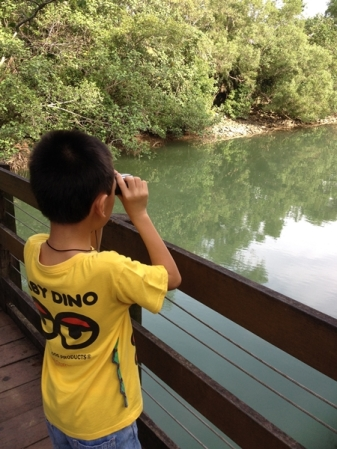 Looking for creatures above and under in Sungei Tampines