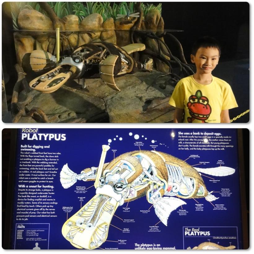 Robot Platypus