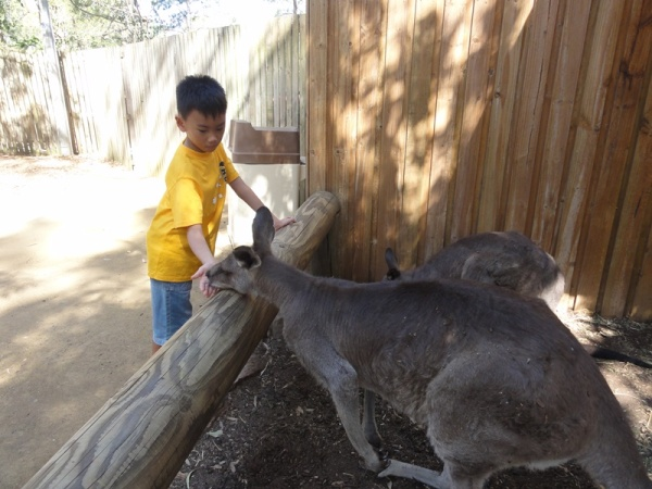 I wasn't afraid to hand feed the kangaroo