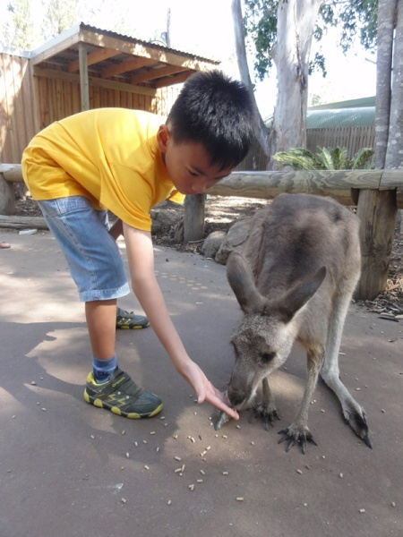 I loved feeding the kangaroo
