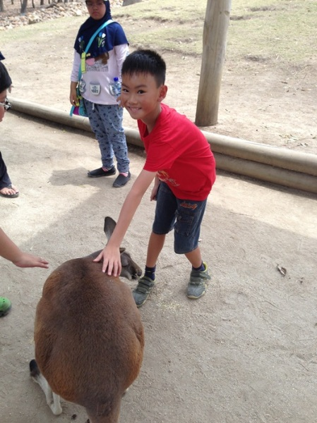 It was so difficult to take him out from this area and to have lunch. He really enjoyed and liked to see, touch, and feed the animals