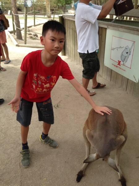 Brave enough to touch the kangaroo