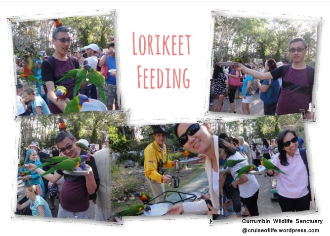 Lorikeet Feeding