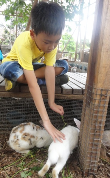 Finally, for the first time, he was brave enough to touch the rabbit