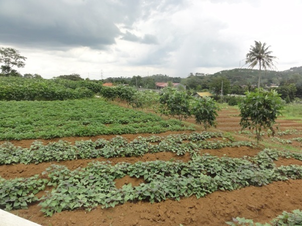 Vegetable farm on back side, not ready to be harvested