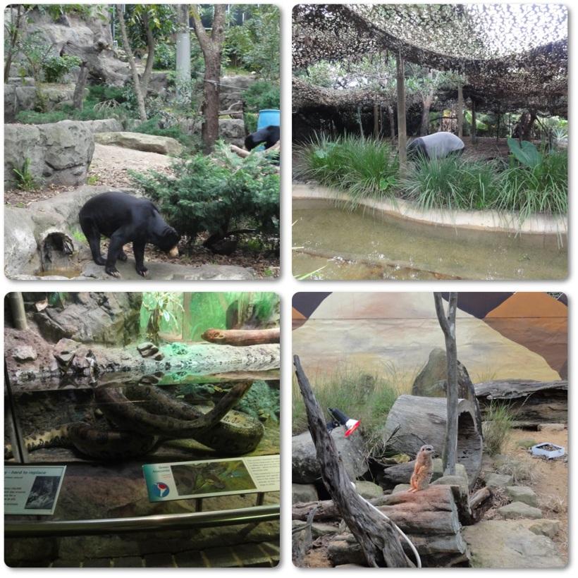 Sun bear, tapir, meerkat, and snake