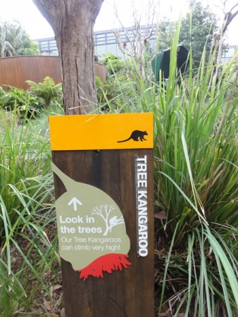The information about the tree kangaroo that we saw from outside the zoo