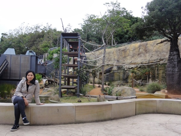 Lemurs are movie stars (remember King Julian from Madagascar the Movie?), so they got really nice house in this zoo........