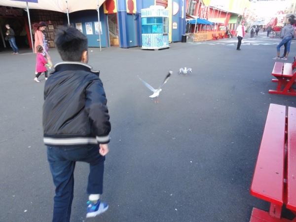 Chasing naughty seagulls