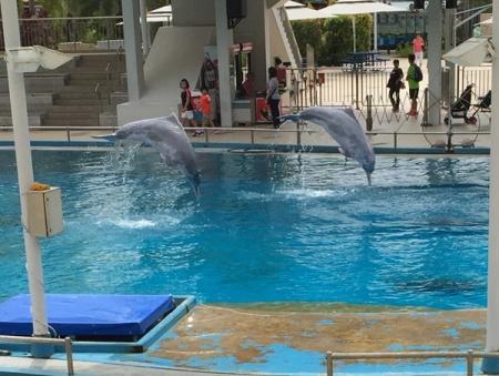 Jump Dolphin Jump...........