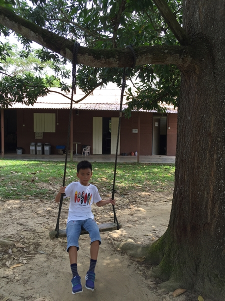 Another swing from wood and attached to a tree branch