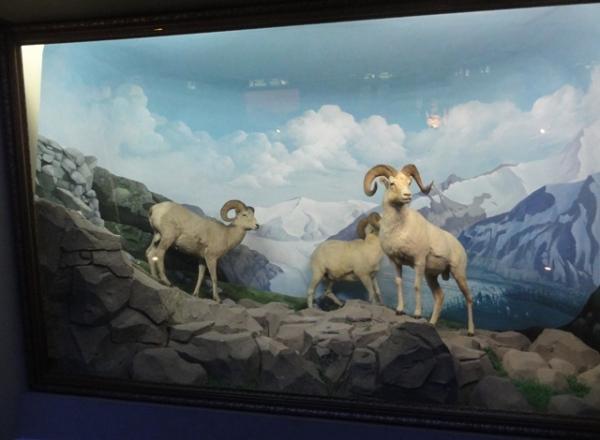 Animal display in their habitat