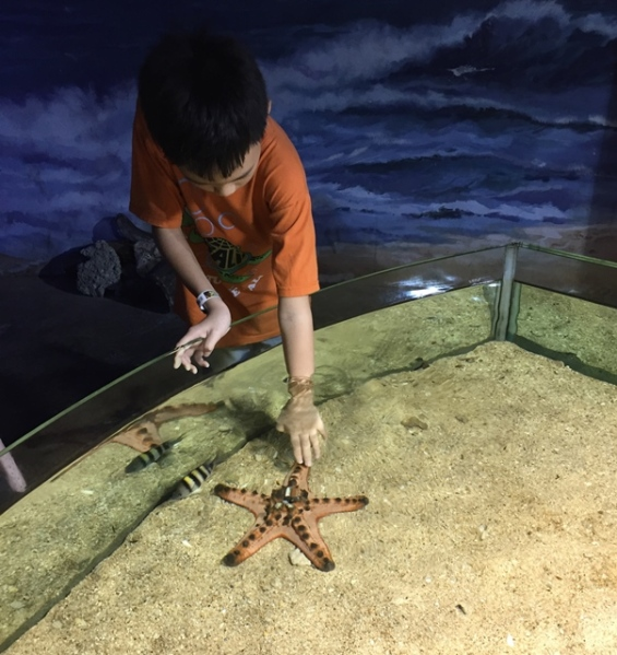 We could touch the star fish in the touch pool