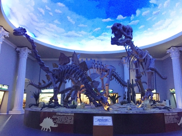 Big dinosaur fossils which we could see as soon as we entered the front door