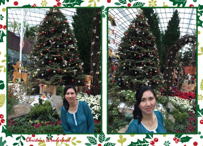 More and more Christmas trees.............