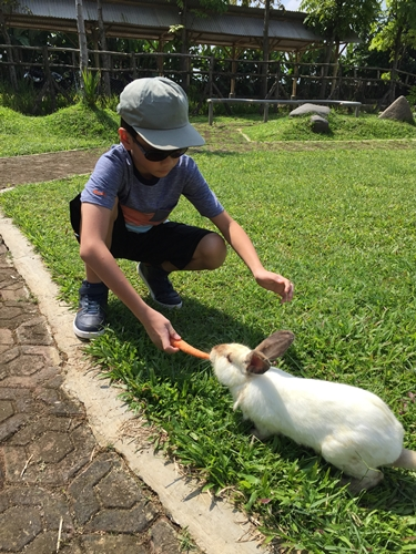 Happily feeding the rabbit...............at first..............and then: